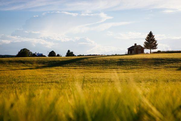 najlepsze pomysły na biznes na wsi